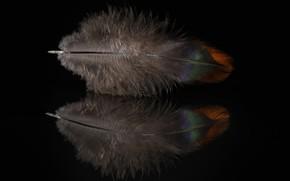 Картинка отражение, перо, минимализм