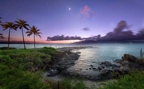 Картинка ночь, пальмы, океан, побережье, звёзды, Hawaii, Maui