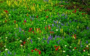 Картинка трава, цветы, луг