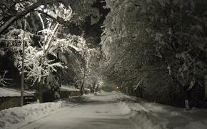 Картинка Зима, Дорога, Ночь, Снег, Мороз, Winter, Frost, Night, Snow, Trees
