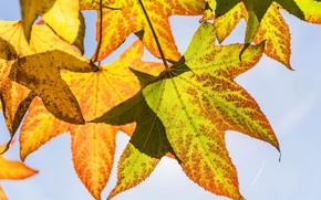 Картинка осень, небо, листья, макро