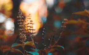 Картинка природа, растение, ветка, стебель