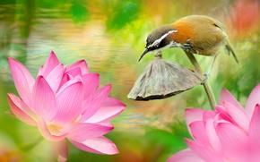 Картинка вода, цветы, природа, тропики, птица, лотосы