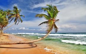 Картинка море, небо, пальмы