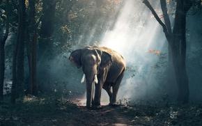 Картинка слон, forest, road, tree, asia, wildlife, elefant, tusks, rays of light