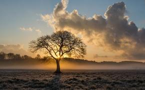 Картинка поле, лес, небо, солнце, облака, туман, дерево, рассвет