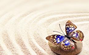 Картинка песок, камни, бабочка, stone, butterfly, sand
