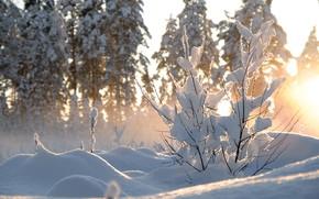 Картинка зима, солнце, снег, деревья, природа, куст