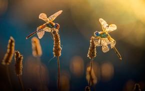 Картинка трава, солнце, блики, боке, стрекозы