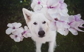 Картинка цветы, собака, Nanook