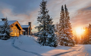 Обои лес, солнце, зима, север, снег, холод, свет, домики