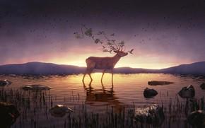 Картинка небо, вода, горы, природа, олень, колибри, фэнетзи, 3D-графика, by IkyuValiantValentine