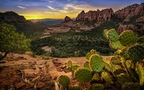 Обои США, Аризона, Седона, горы, скалы, кактус