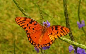 Картинка природа, бабочка, крылья, мотылек