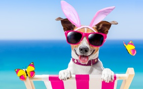 Обои dog, очки, бабочки, bunny ears, пляж, funny, beach, happy, vacation, собака, sunglasses