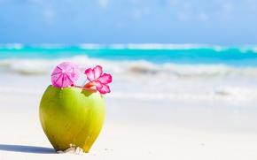 Картинка песок, пляж, цветок, тропики, зонтик, кокос, коктейль, трубочка, блюр
