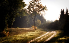 Обои дорога, лес, лето, пейзаж, туман, красота, утро