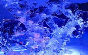 Картинка лед, рыбы, Канада, скульптура, Оттава, Парк Конфедерации