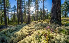 Картинка лес, Норвегия, Norway, Buskerud Fylke, Sundbulien