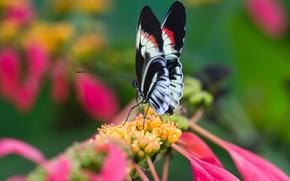 Картинка цветок, природа, бабочка, крылья, лепестки