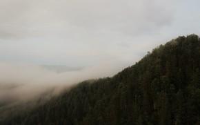 Картинка лес, облака, деревья, горы, туман, утро, сырость