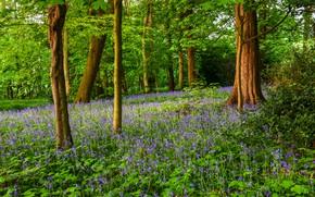 Картинка Зелень, Природа, Деревья, Лес