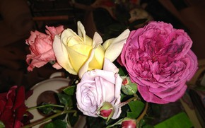 Картинка фон, цвет, розы, mamala ©