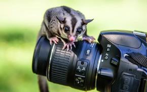 Обои камера, фотоаппарат, животное