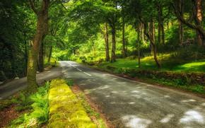 Обои лес, зелень, Hilterfingen, деревья, дорога, парк, Canton of Bern, Швейцария