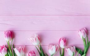 Картинка цветы, тюльпаны, розовые, fresh, wood, pink, flowers, beautiful, tulips, spring, tender