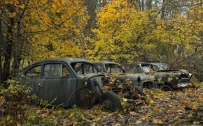 Обои лес, осень, машины