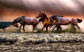 Картинка море, волны, небо, пена, лучи, свет, тучи, берег, кони, лошади, бег, прибой, три, трио, коричневые, …