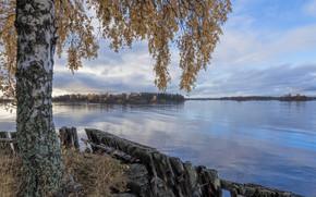 Картинка осень, озеро, берёза