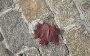 Картинка осень, лист, большой город