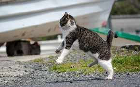 Обои кошка, поза, прыжок