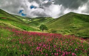 Картинка поле, цветы, природа, холмы