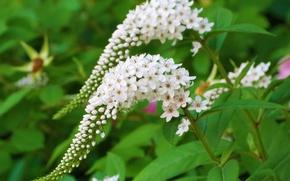 Картинка Spring, Flowering, White flowers