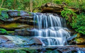 Картинка зелень, лес, деревья, камни, листва, водопад, мох, HDR, Австралия, кусты