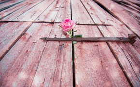 Картинка цветок, роза, дверь