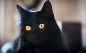 Картинка глаза, кот, черный