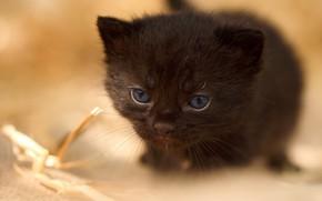 Картинка глаза, котенок, малыш