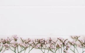 Картинка цветы, фон, веточки