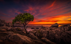 Картинка пейзаж, дерево, небо, камни, море