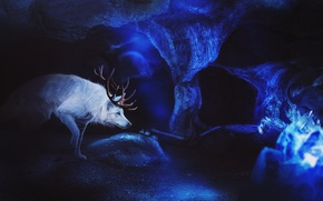 Картинка лед, волк, фэнтези, пещера, by Fiirewolf