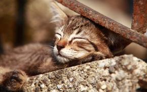 Картинка сон, котёнок, спящий