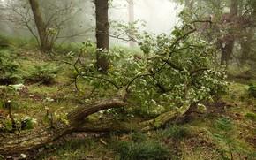 Картинка Зелень, Деревья, Лес