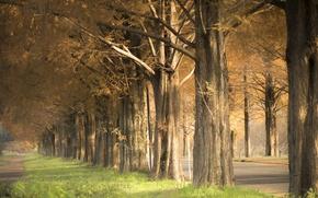Обои осень, деревья, улица