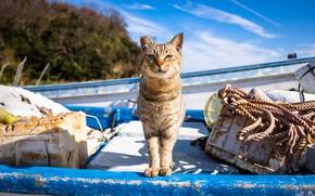 Обои кот, взгляд, лодка, ухо