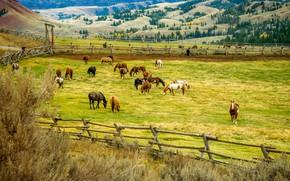 Обои поля, природа, деревья, лошади, загон, холмы, изгородь, пейзаж