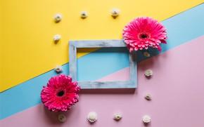 Картинка цветы, рамка, colorful, герберы, wood, pink, flowers, spring, gerbera